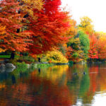 foliage-fall-central-park-new-york-city-photo-cc