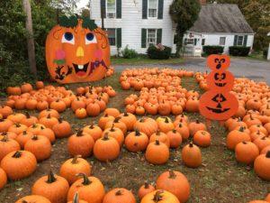 pumpkin_tradition